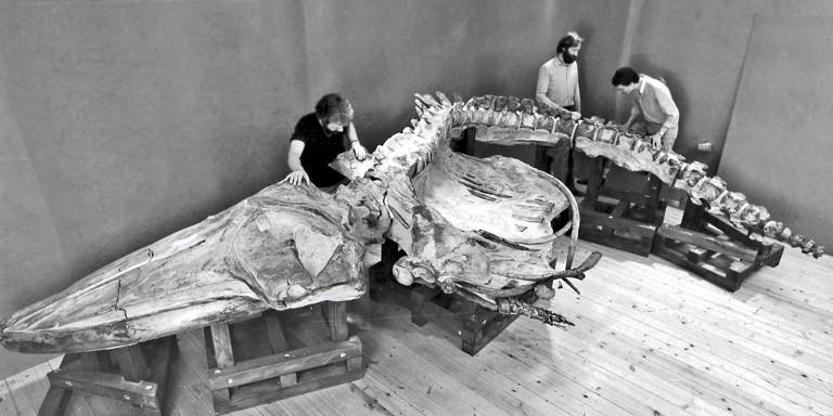 Siber 1986 Wal Josephina